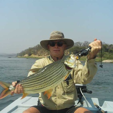 Huge Tiger Fish caught on the Zambezi River